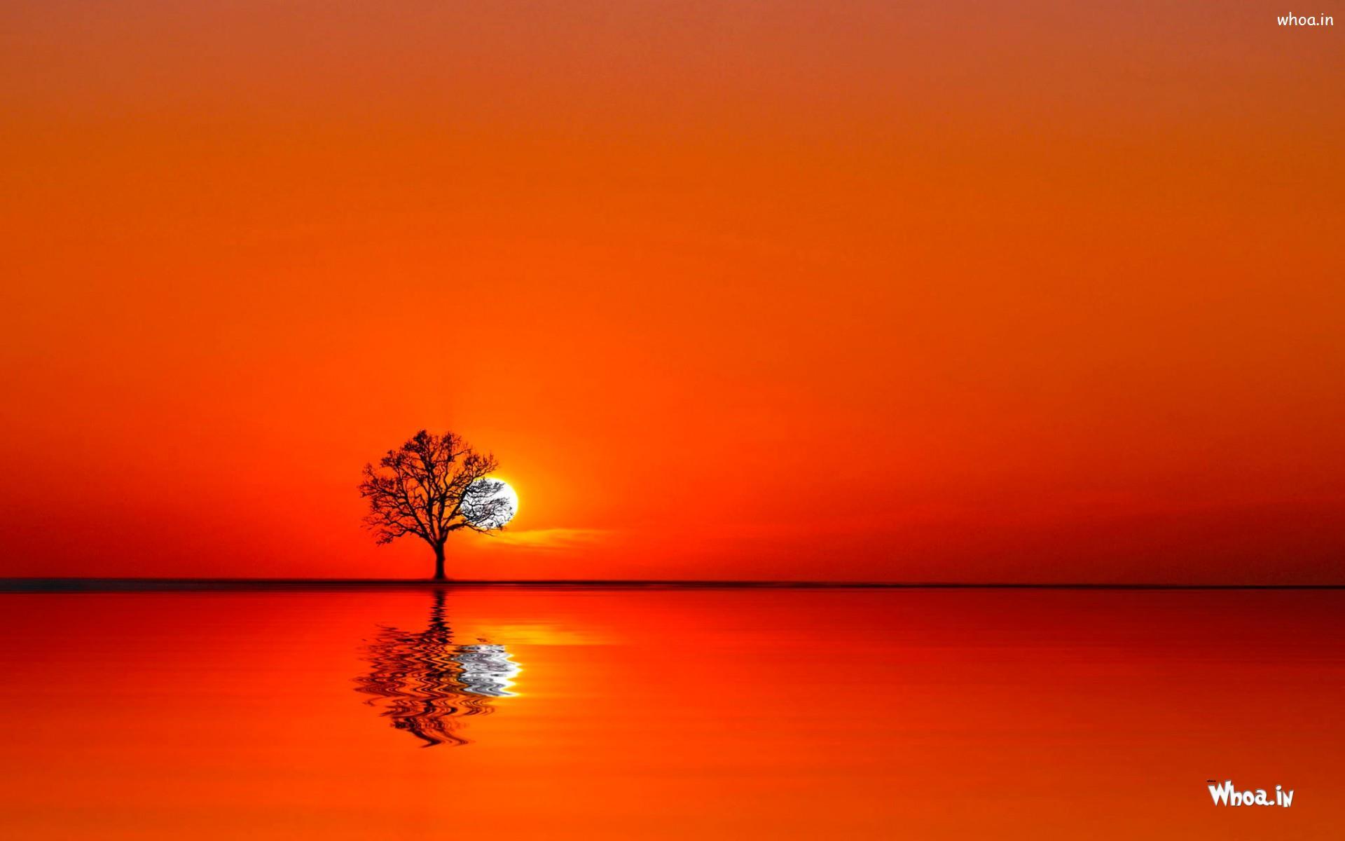 beautiful natural sunrise with orange background hd wallpaper