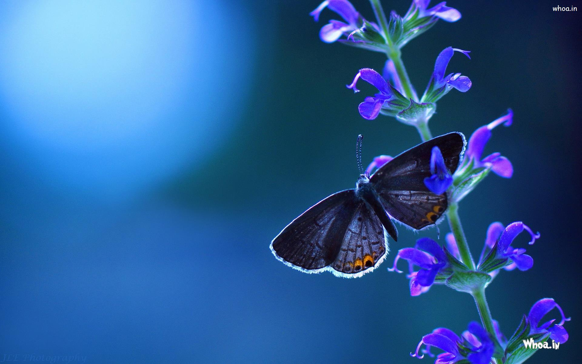 natural butterfly wallpaper for mobile