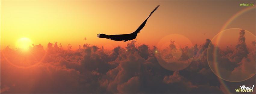 Bird Animal Art Facebook Cover 1