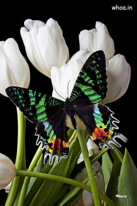 Colorful Butterfly Hd Wallpaper With Wallpapers