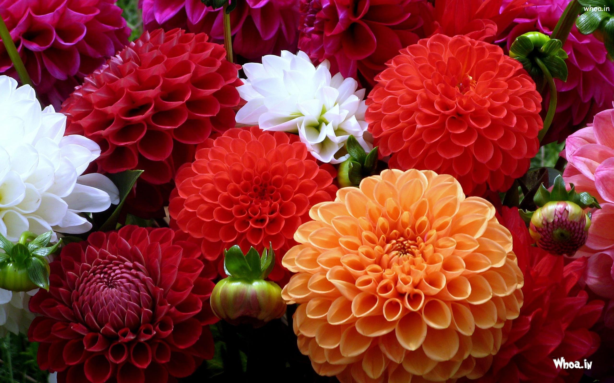 Different Color Flowers Hd Wallpaper