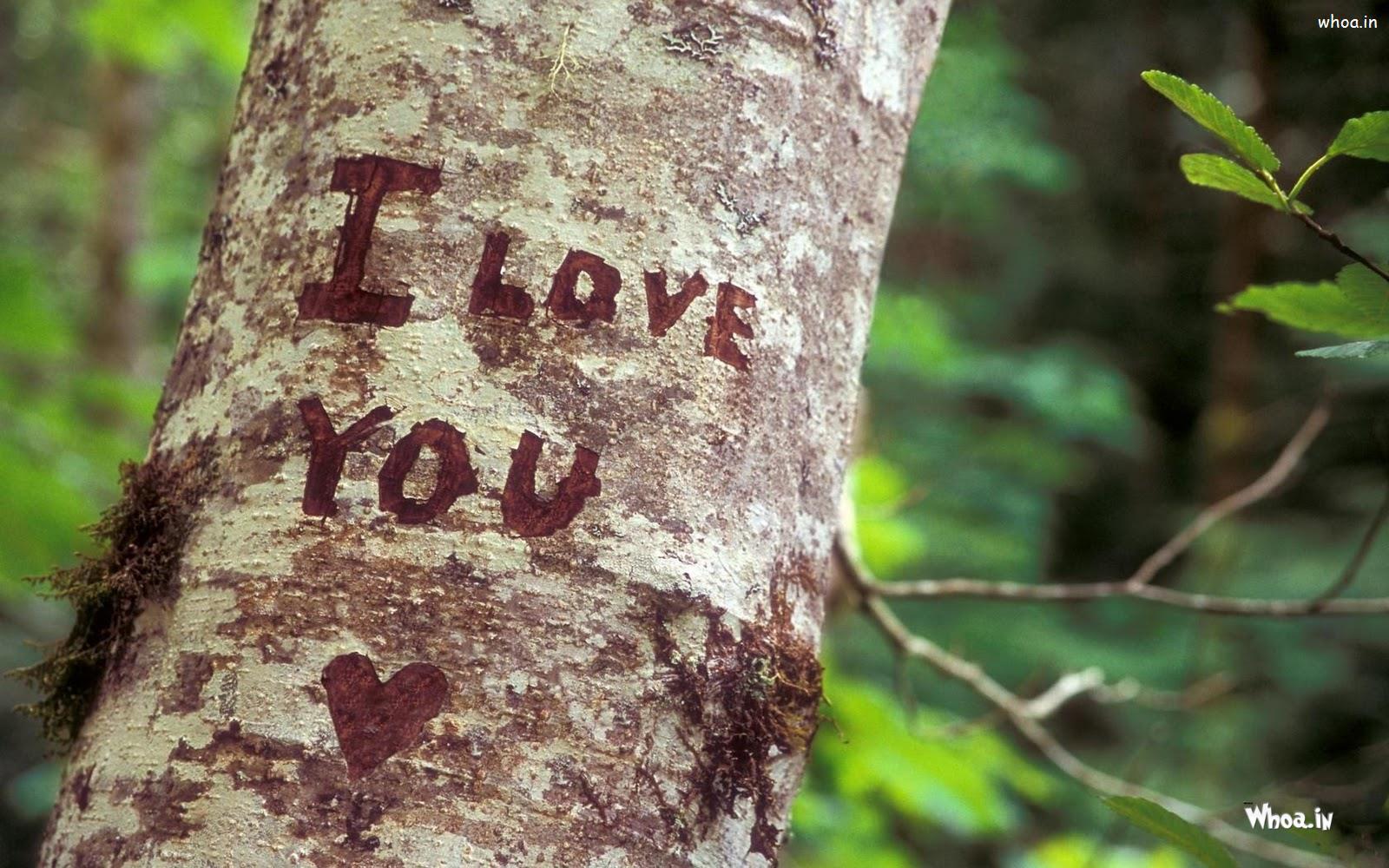 I Love You Heart Tree Nature Hd Wallpaper