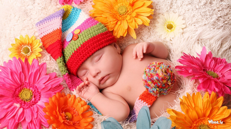 Newborn Cute Baby Sleeping With Gerbera Flower Hd Baby Sleep Wallpaper